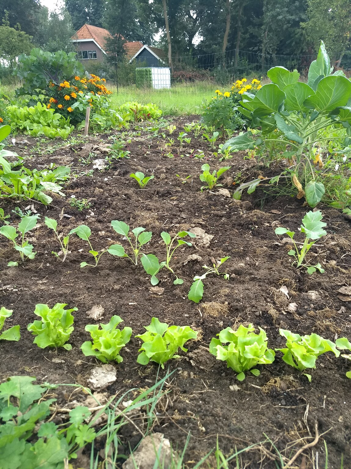 You are currently viewing Moestuin vanaf september